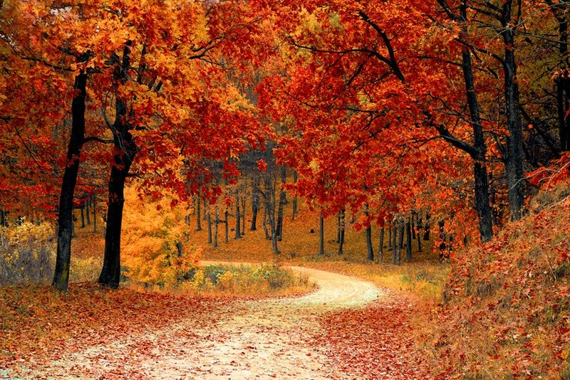A path curving through autumn trees with bright orange and red leaves.